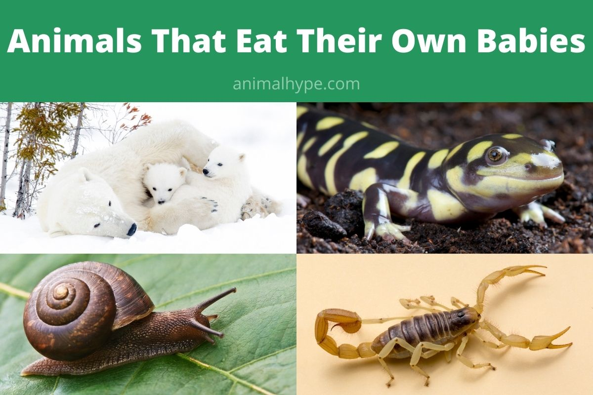 Animals That Eat Their Own Babies