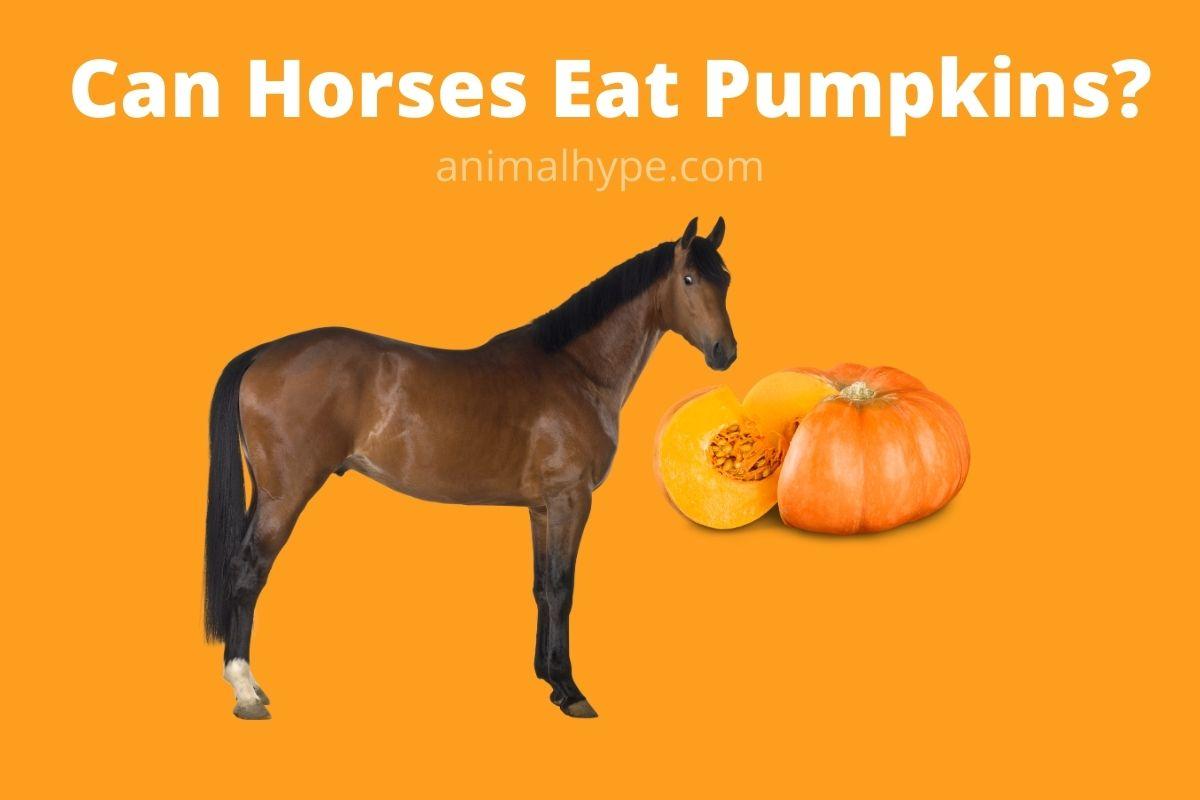 Can Horses Eat Pumpkins