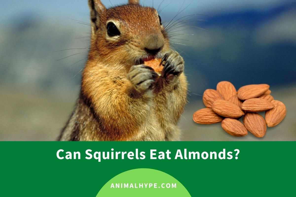Can Squirrels Eat Almonds