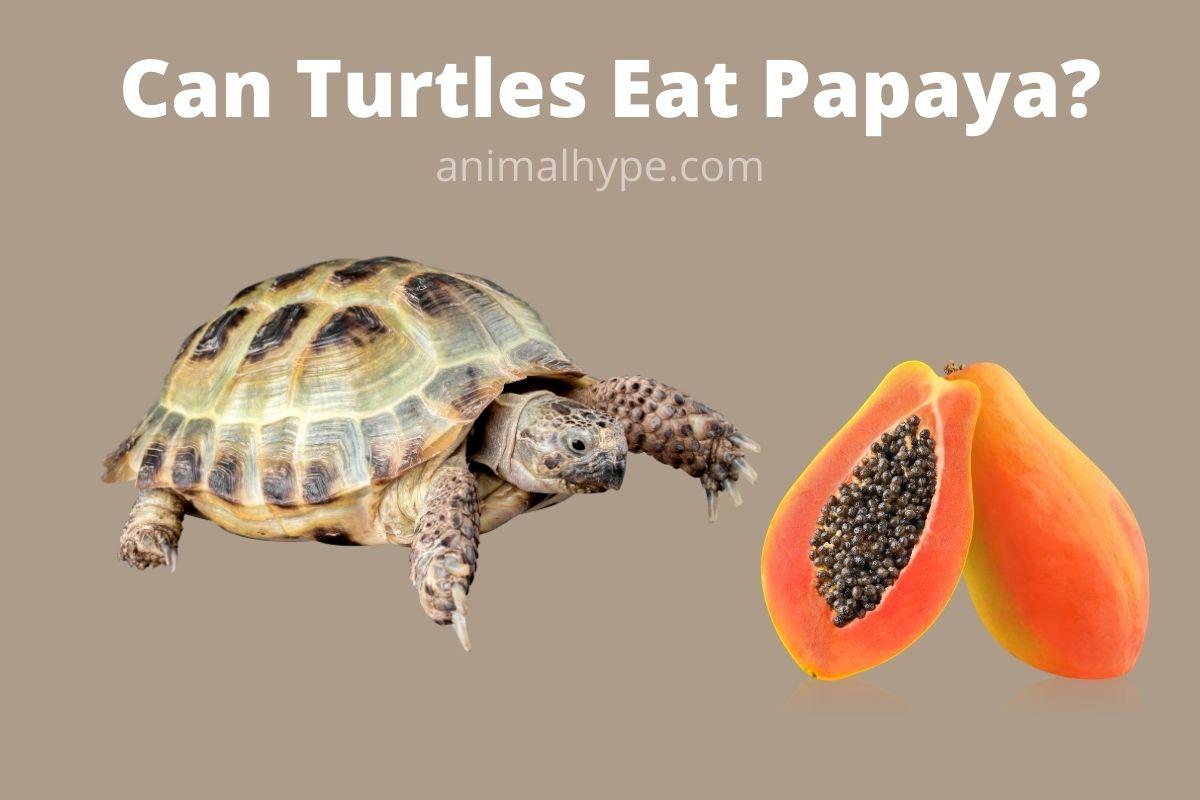 Can Turtles Eat Papaya
