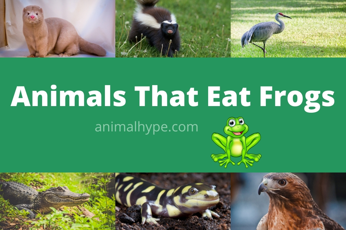 Animals That Eat Frogs