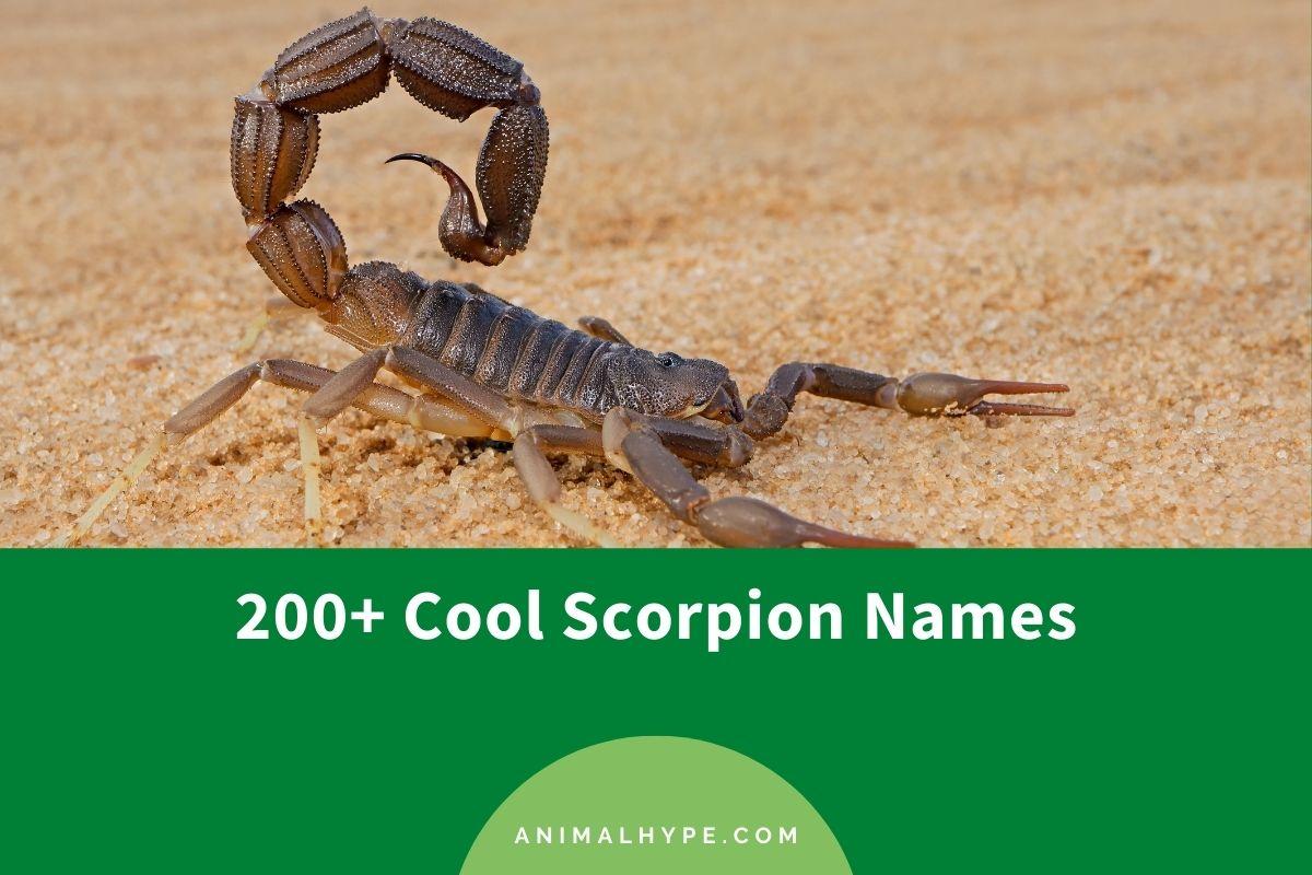 Scorpion Names