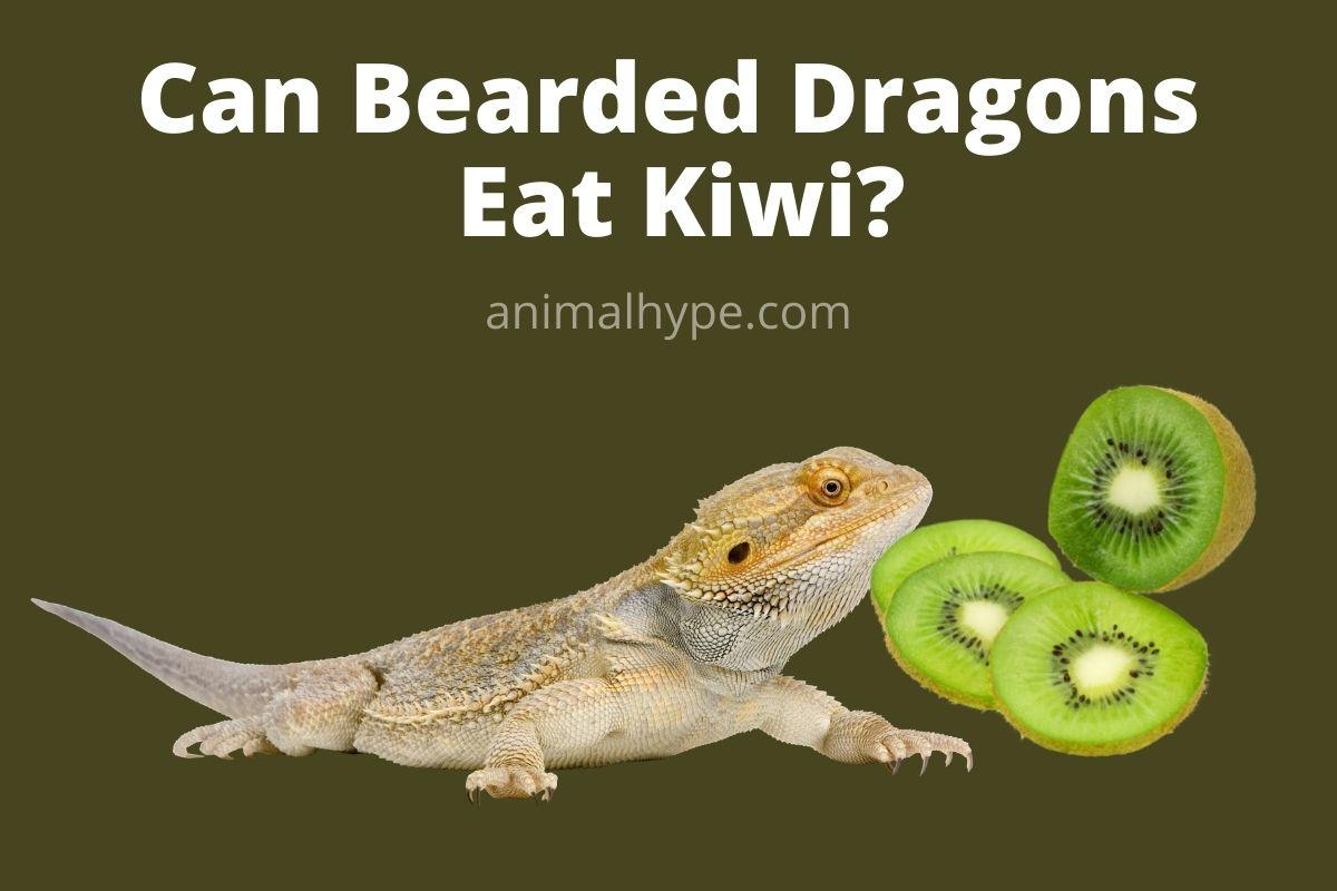 Can Bearded Dragons Eat Kiwi