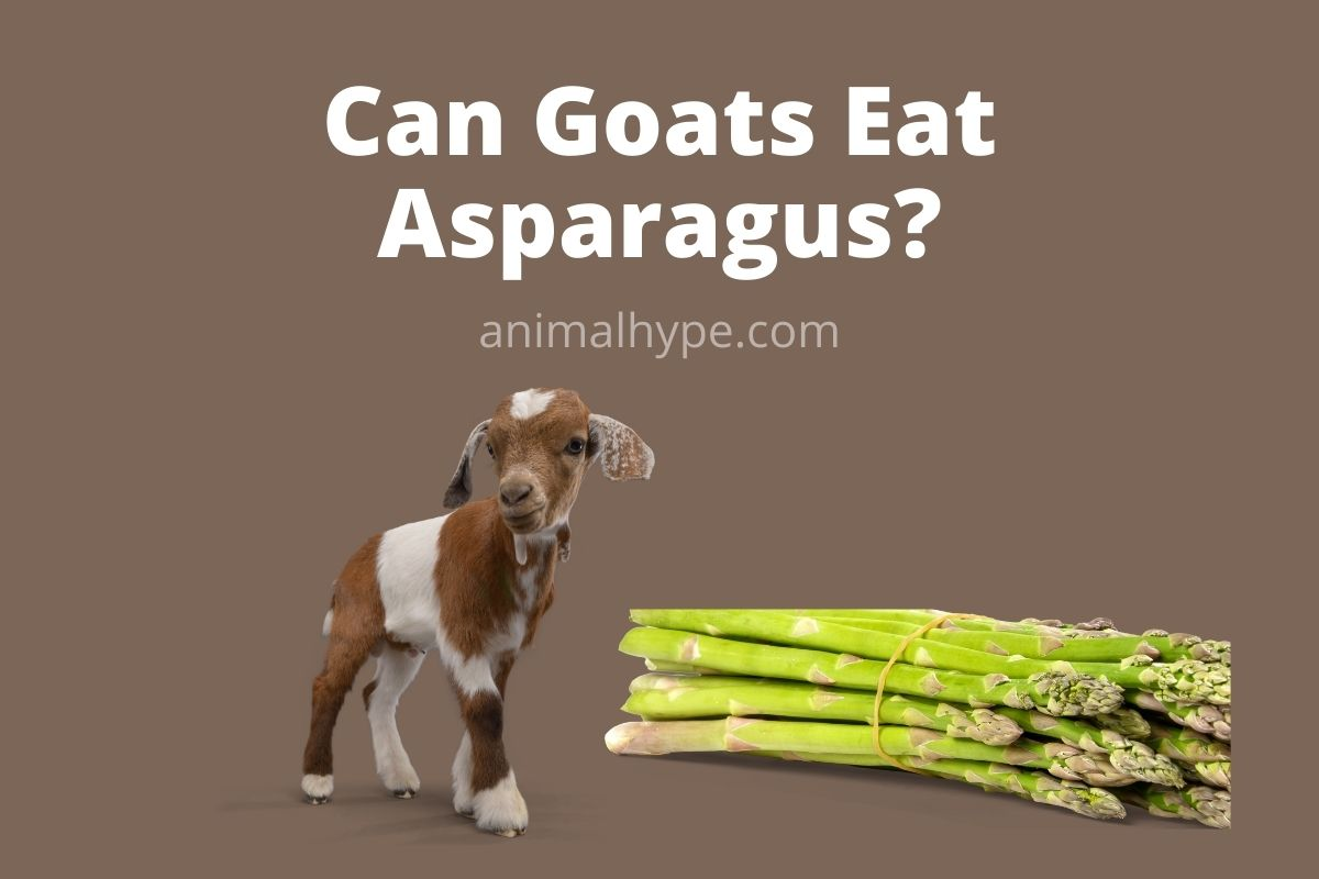 Can Goats Eat Asparagus