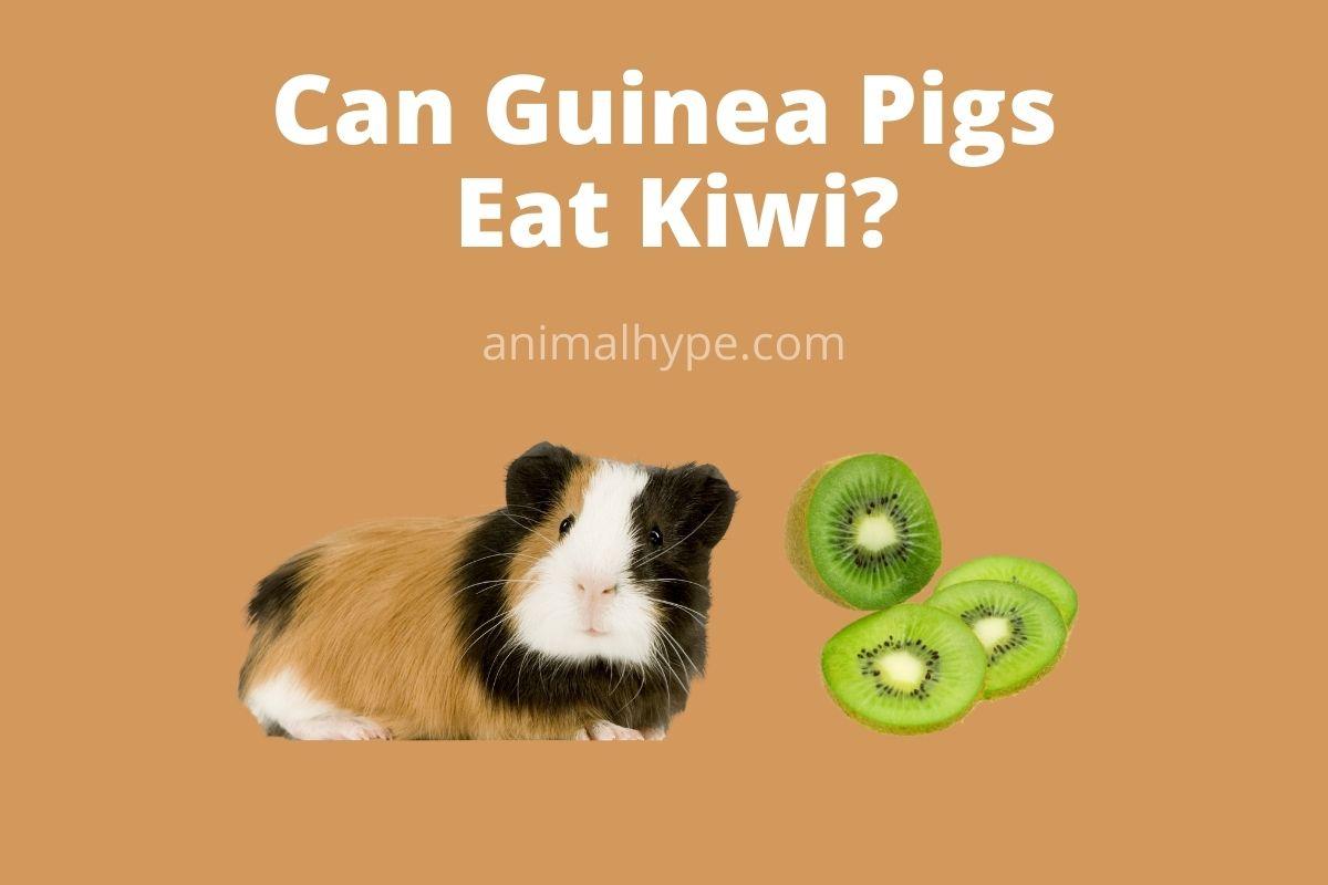 Can Guinea Pigs Eat Kiwi