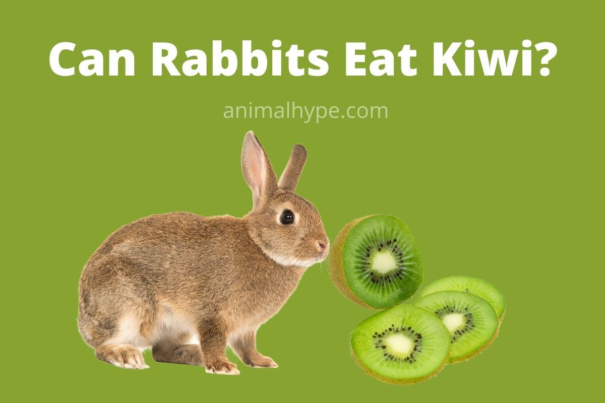 Can Rabbits Eat Kiwi