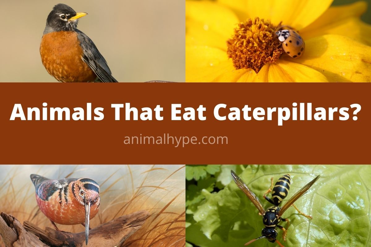 Animals That Eat Caterpillars