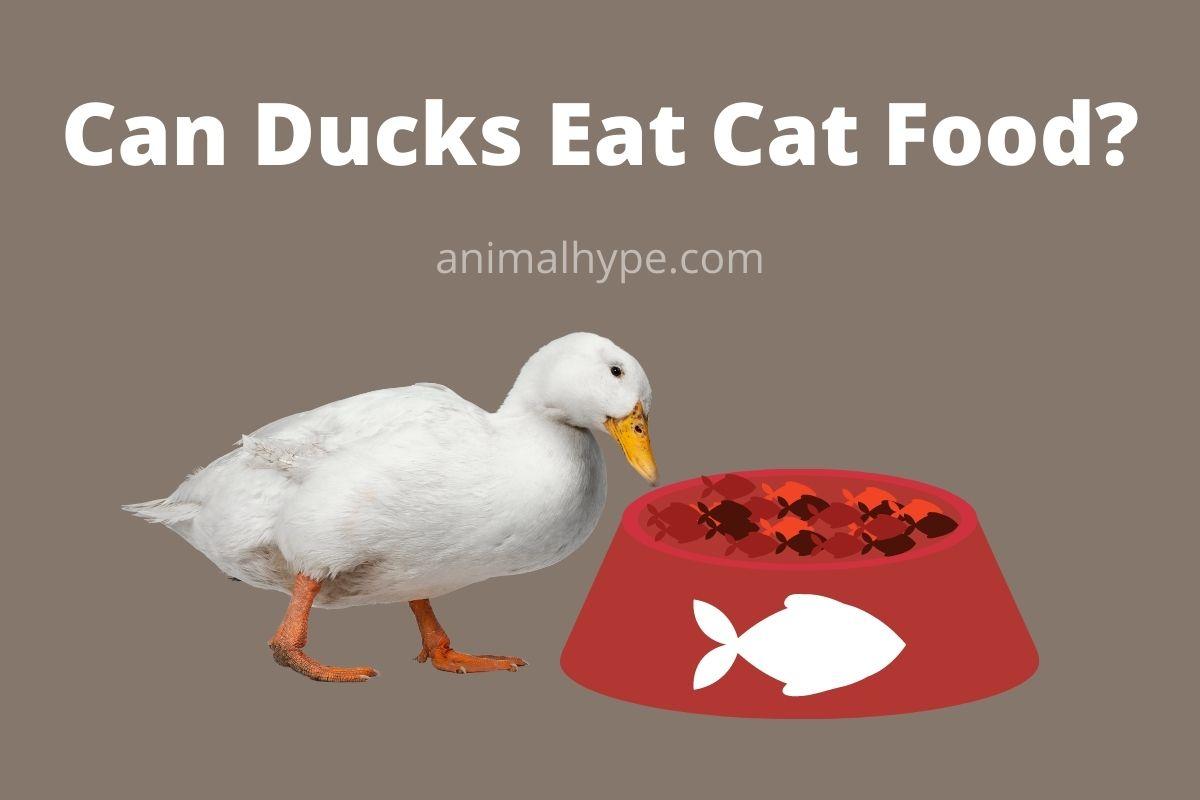 Can Ducks Eat Cat Food