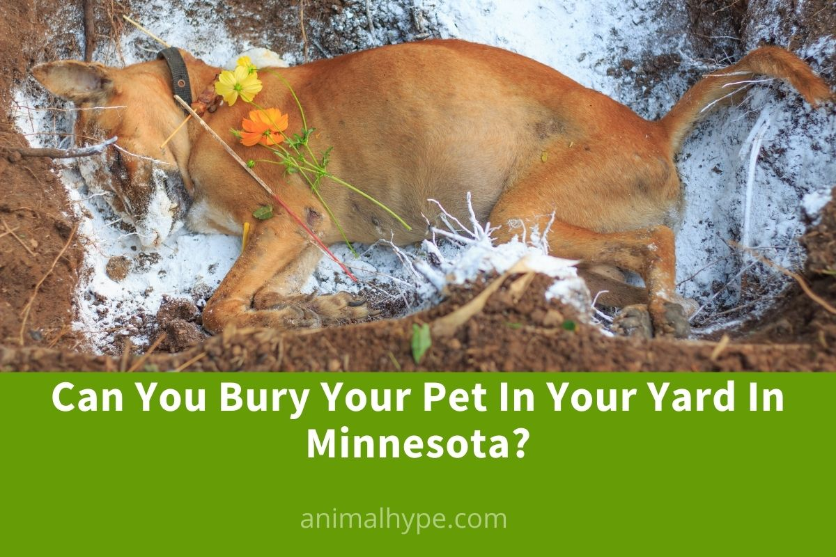 Can You Bury Your Pet In Your Yard In Minnesota