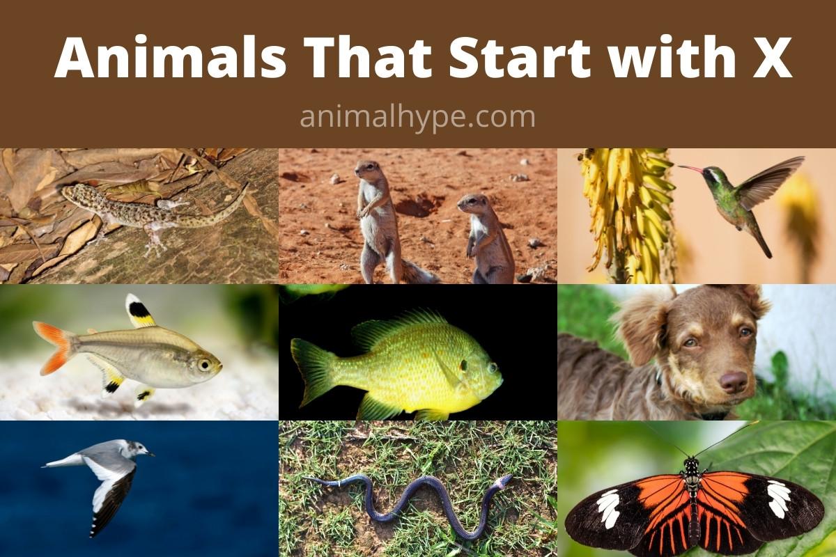 Animals that Start with X