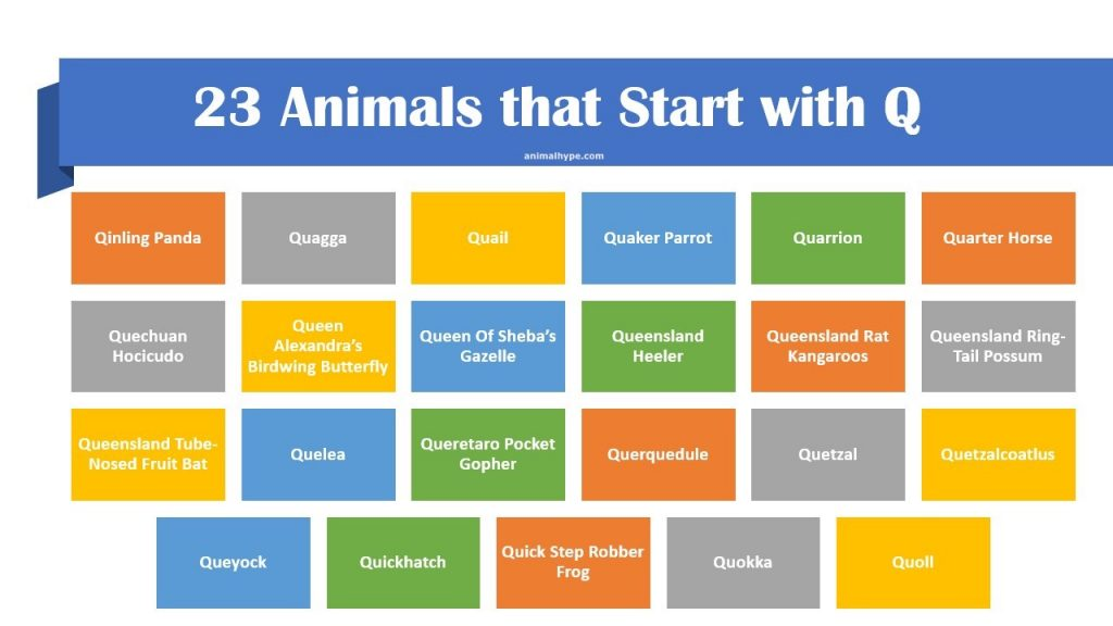List of Animals that Start with Q